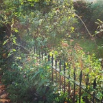 A mystic sunlight garden