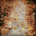 A sidewalk path bordered by orange and yellow leaves.