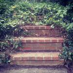 Red brick stairs the disappear into the foliage.